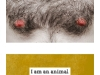 I AM AN ANIMAL postcard